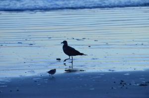 """""""Bird Balancing on Daytona Beach at Sunrise"""""""