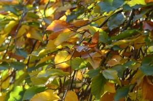Fall Colors in Detroit, Michigan