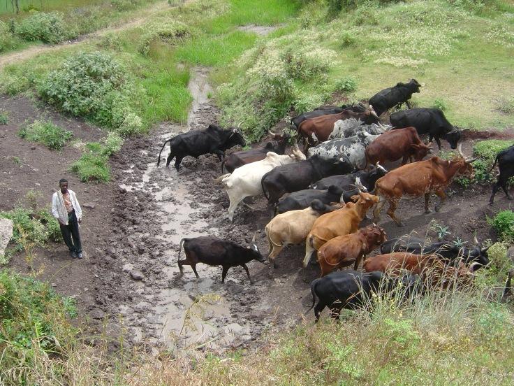 Ethiopia photos 2004 083